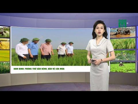 Dự báo thời tiết nông vụ 03/09/2020: Phòng trừ sâu bệnh, bảo vệ lúa mùa